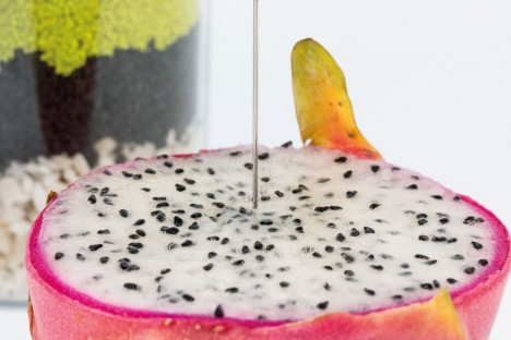 csm_APP_AM_Biology_Dragon_Fruit_fcb9e56dfb